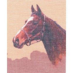 Gobelin 10x13 cm L008 T Pedró (ló)